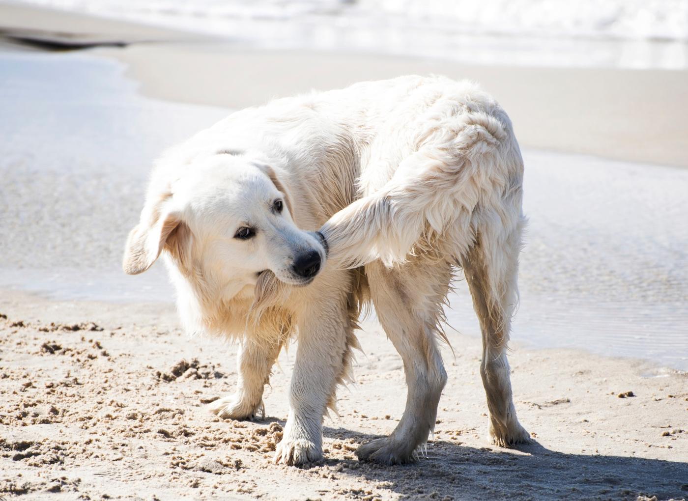 O seu cão persegue a cauda? 9 motivos para esse comportamento