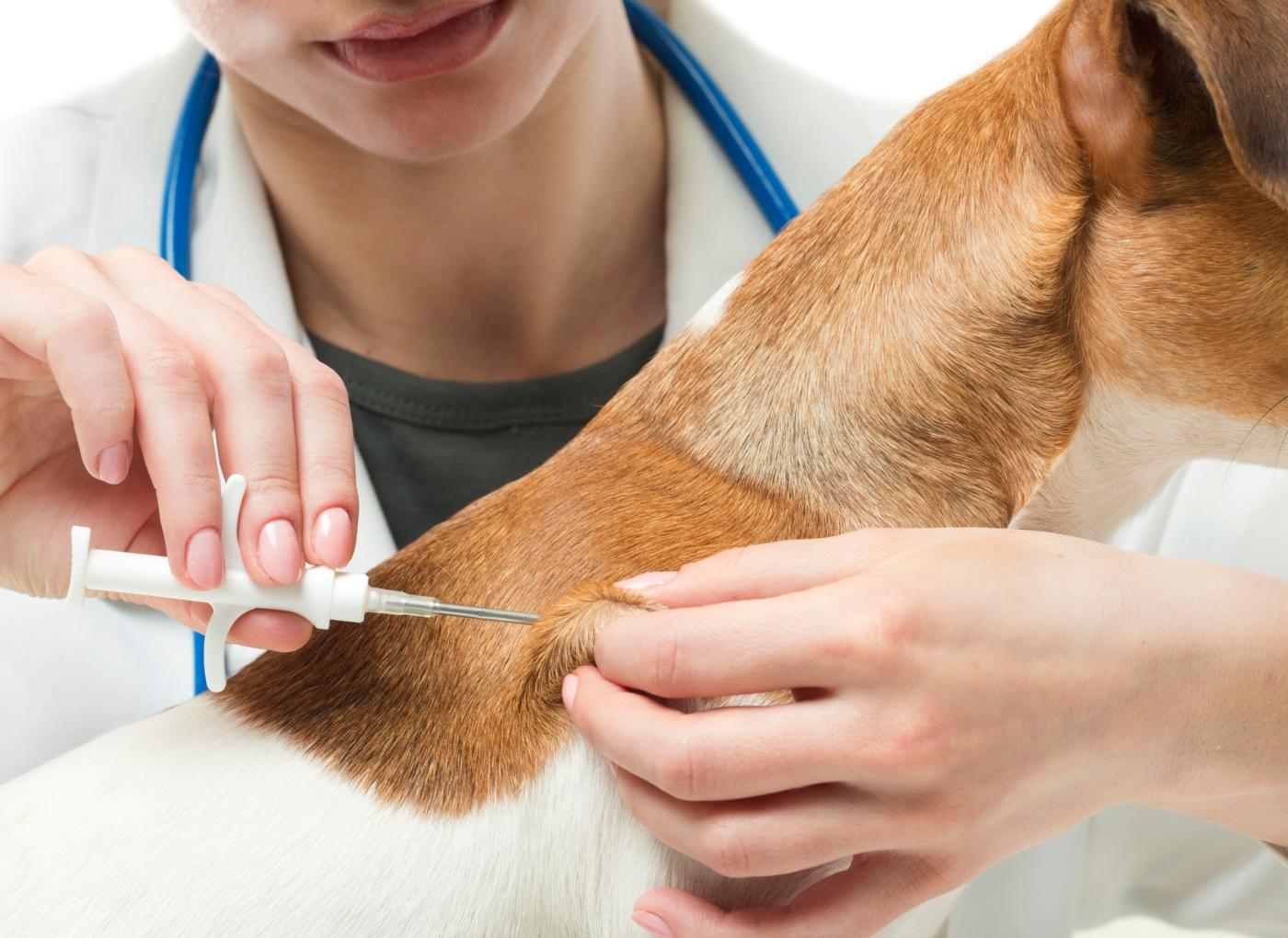 Sabe como fazer o registo animal no SIAC?