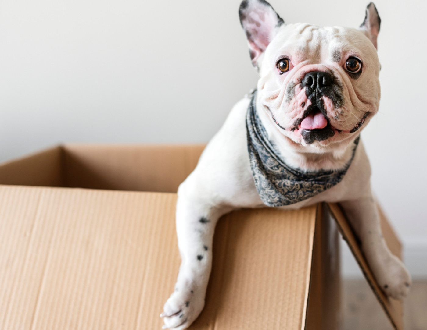 Cachorro numa caixa de papelão