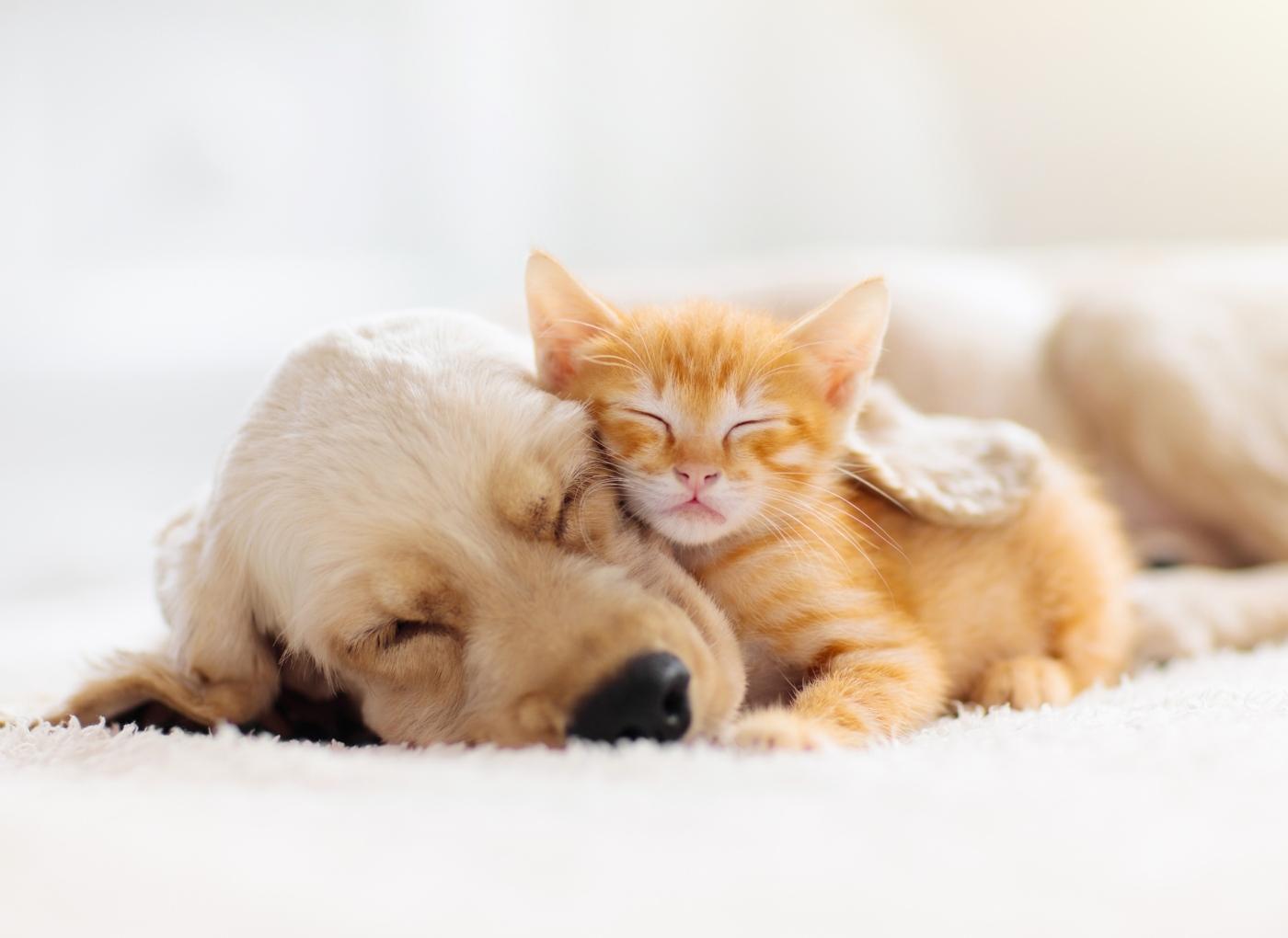 Novo boletim de vacinas para cães e gatos já entrou em vigor