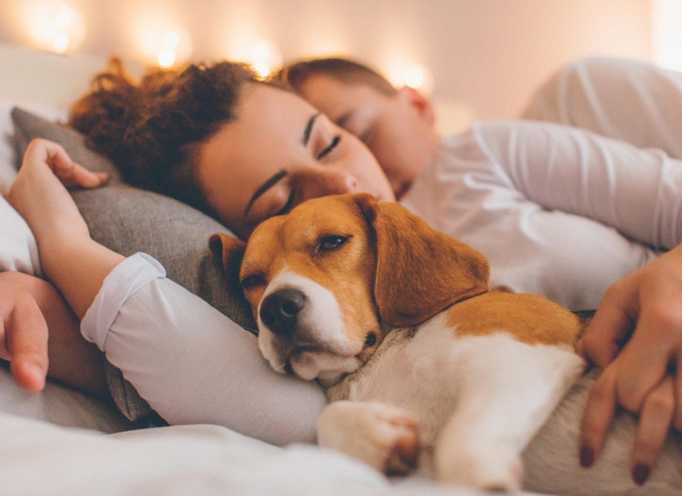 8 razões para adotar um cão sénior
