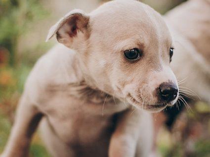 """Associação vai suspender adoções porque os """"animais não são presentes"""""""