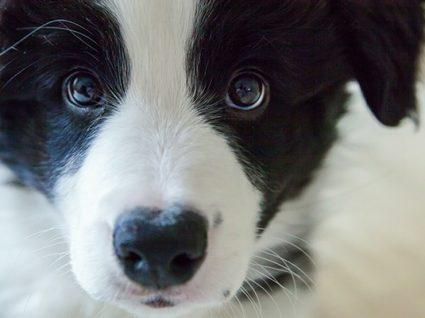 8 dicas para educar um cão nos primeiros meses