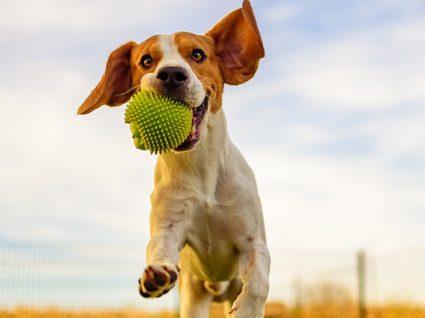 Como interpretar a linguagem dos cães? 5 dicas úteis