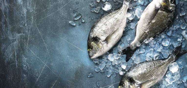 alergias alimentares mais comuns na infancia peixe no gelo