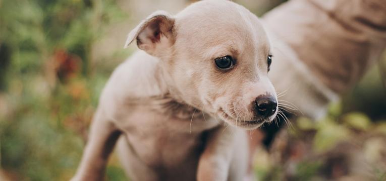 Educar um cão nos primeiros meses: comandos