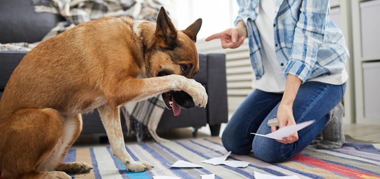 Dominância em cães