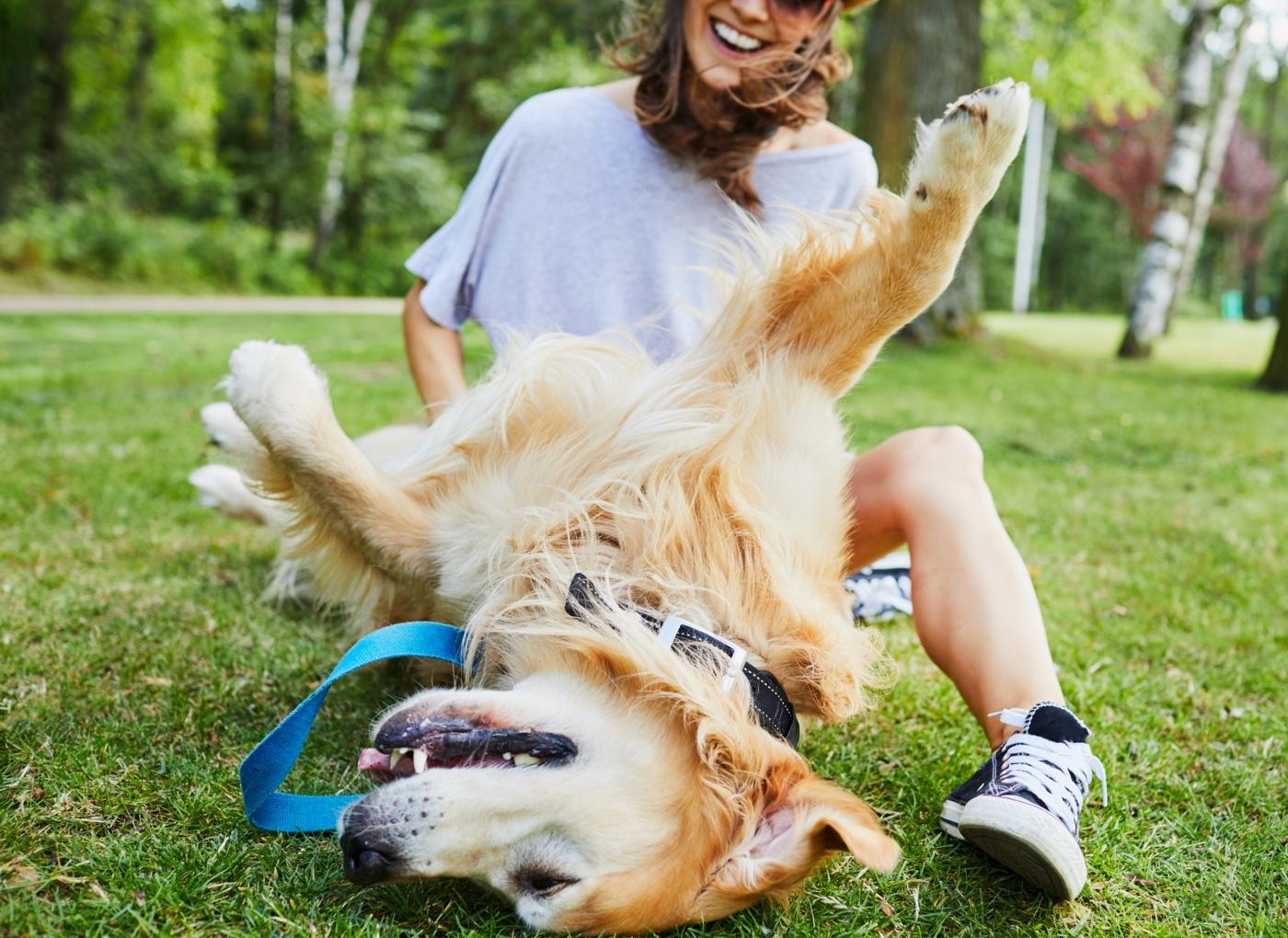 Como antecipar o comportamento de um cão amigável