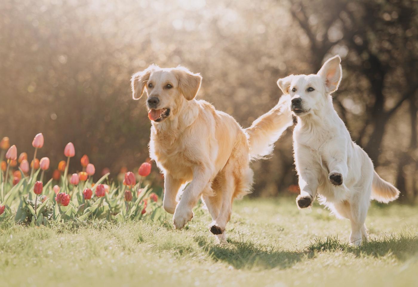 Dois cães a correr no parque