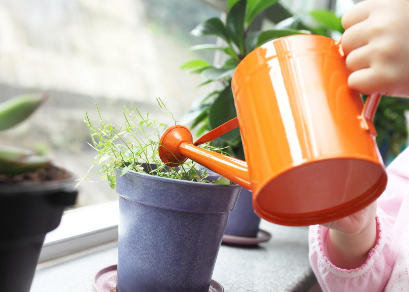easy flora beneficios