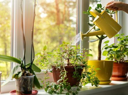 easy flora vantagens vaso sustentavel