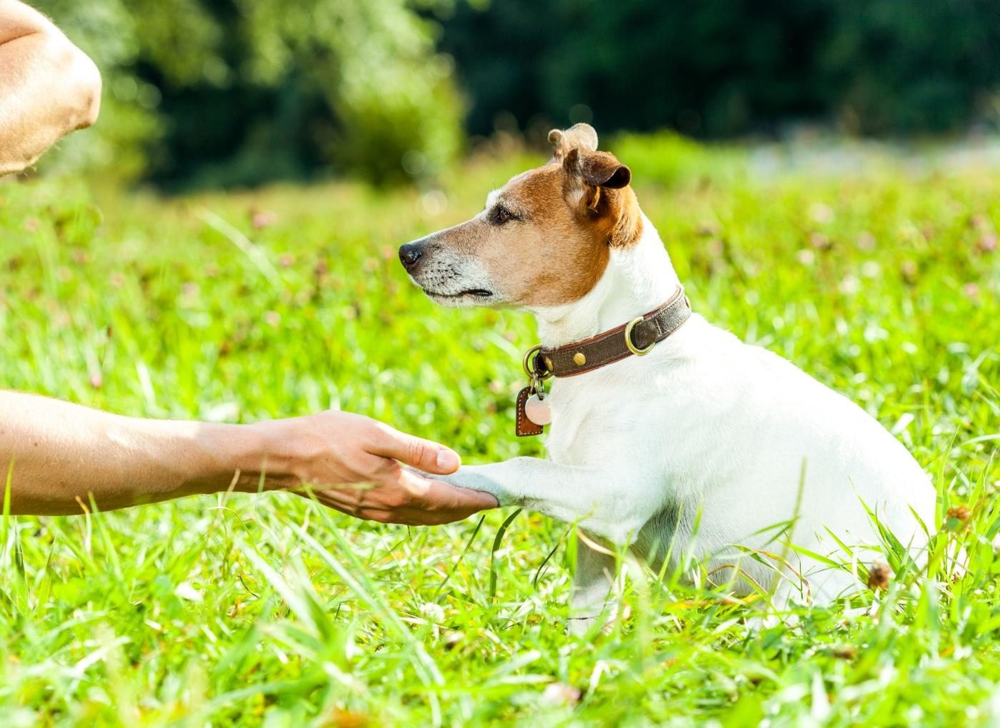 Escola para cães no Porto: ensinar a dar a pata