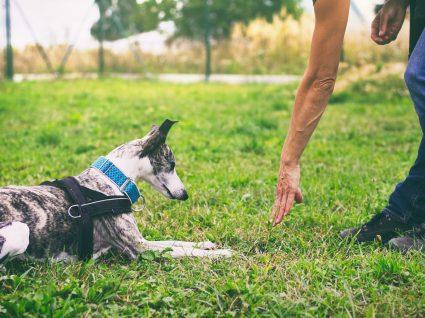Escola para cães no Porto: algumas sugestões