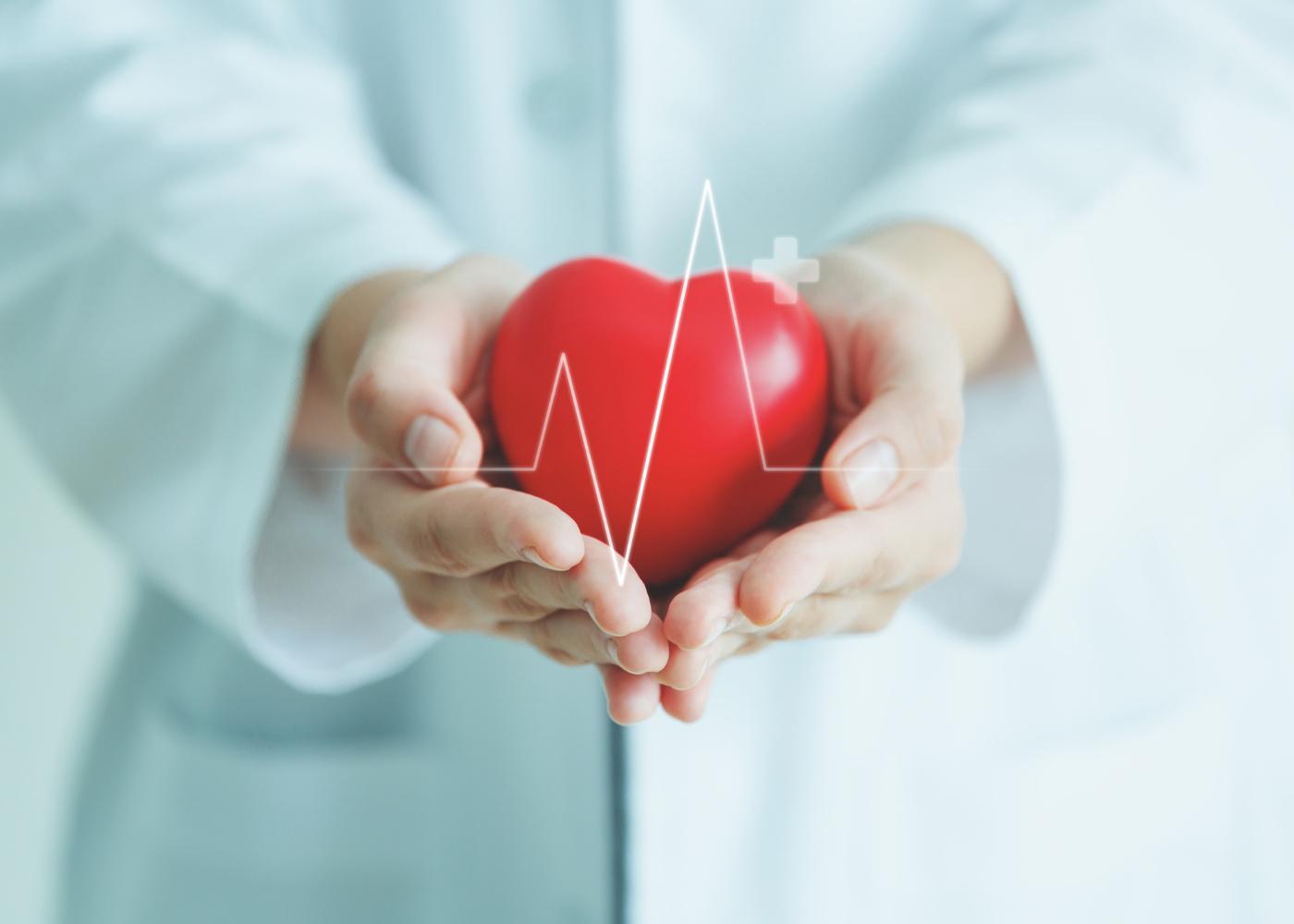 Médico com maquete de coração nas mãos