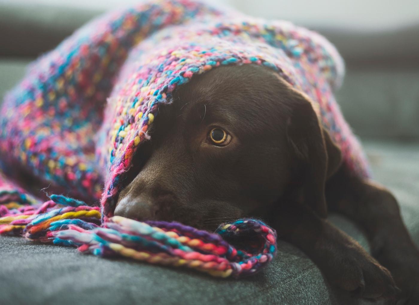 Cão perdeu o apetite: causas