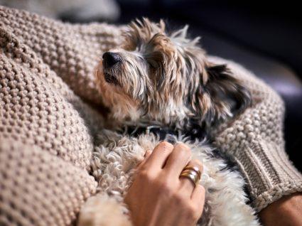 Cão está mais parado do que o habitual: sintomas a estar atento