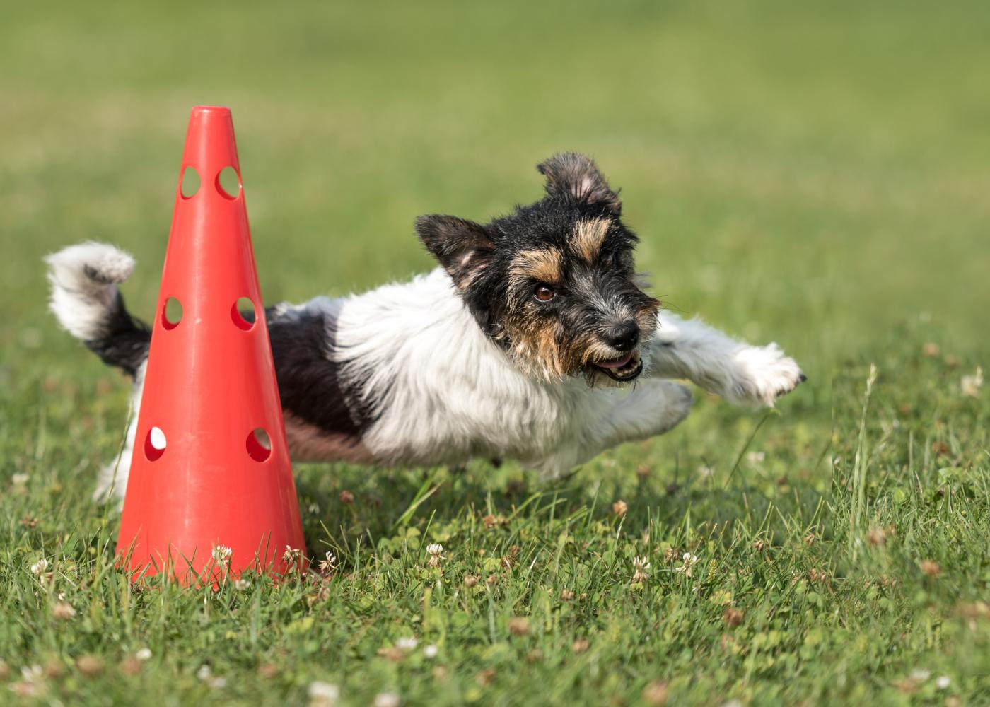 fun center canino em portugal