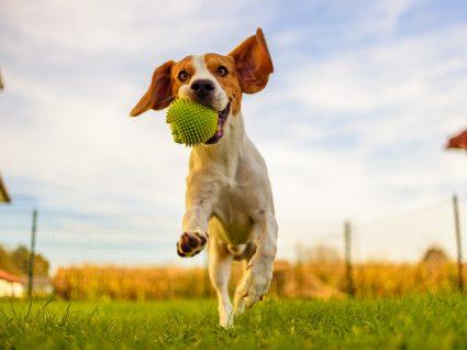 fun center canino