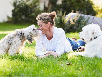 Tipos de pelos dos cães: o que saber