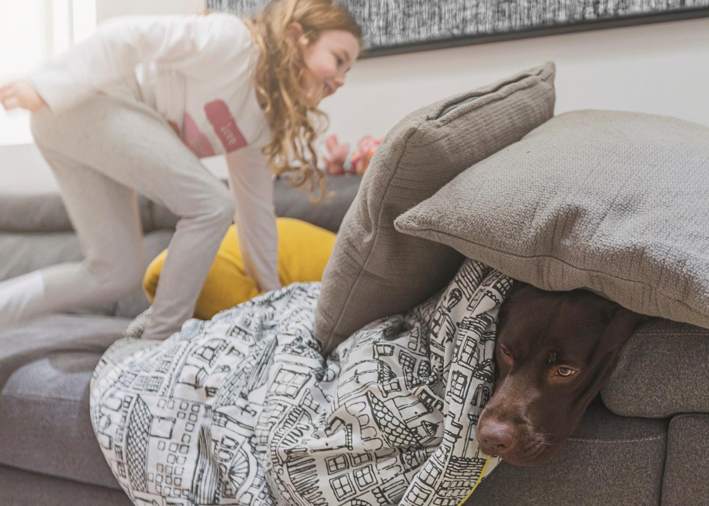 Cão em apartamento a brincar com criança
