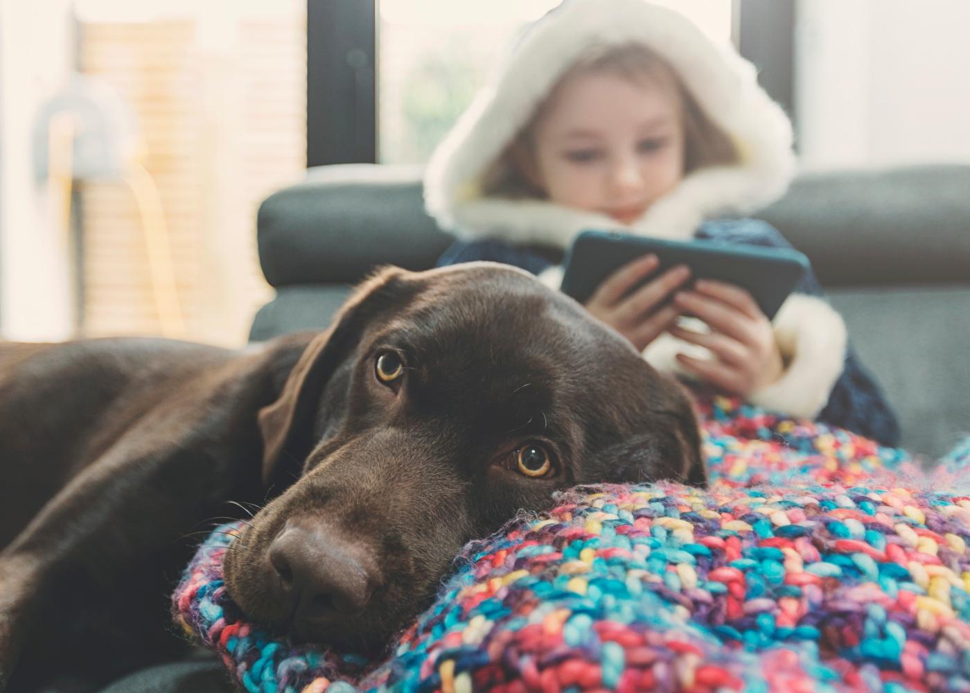 Adotar um animal de estimação: cão deitado no colo de criança
