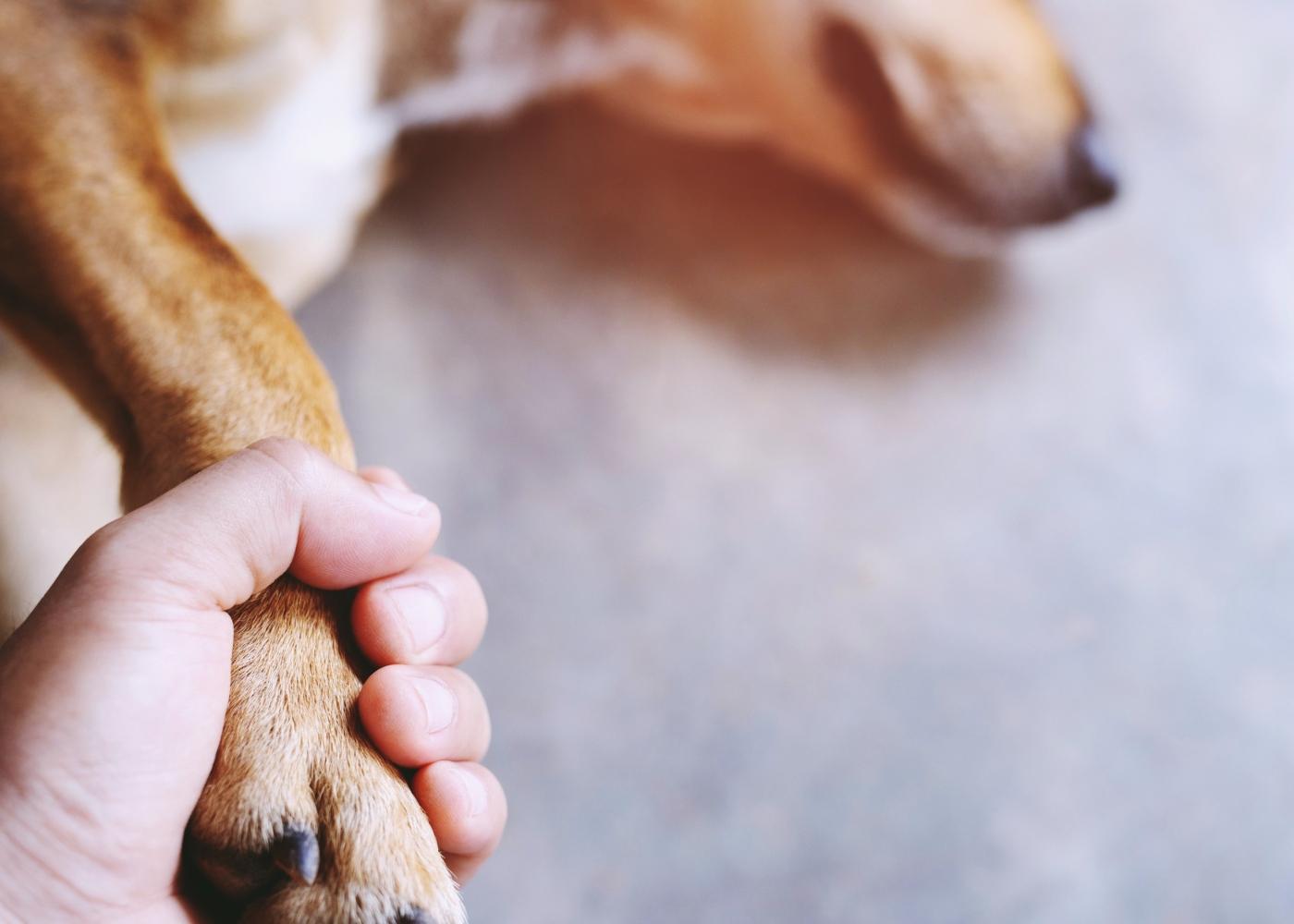 problemas hepáticos nos cães: tutor a segurar a pata de cão doente