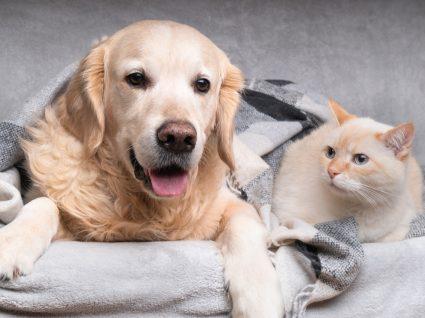 Como poupar nas despesas do seu animal de estimação? Algumas dicas