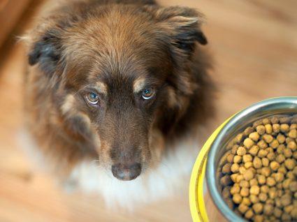 Tutor a dar ração sem cereais a cão
