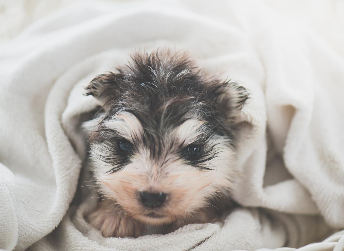 Primeiro banho ao cão: tutora a enxaguar cão