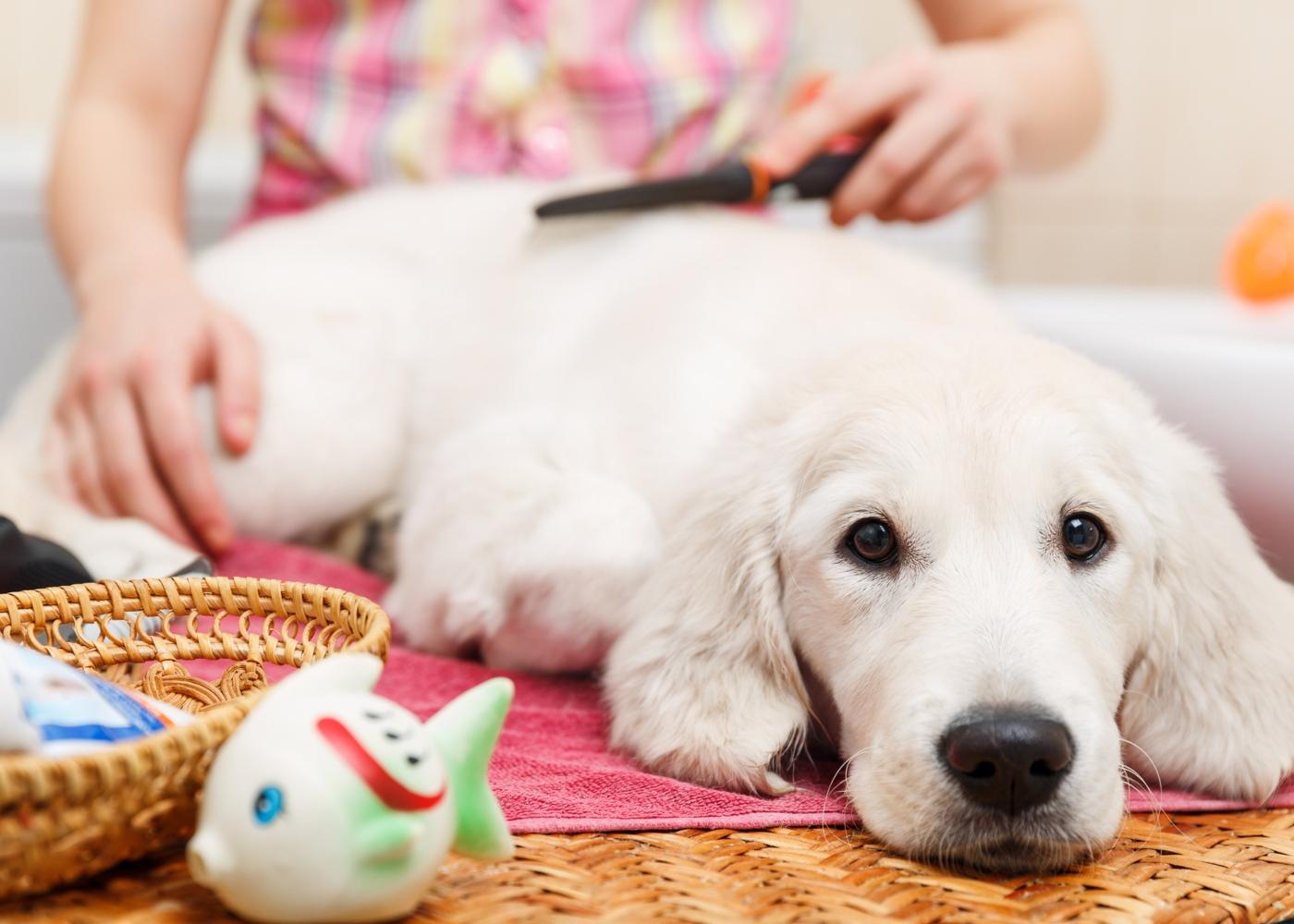 Primeiro banho ao cão: tutora a escovar cão