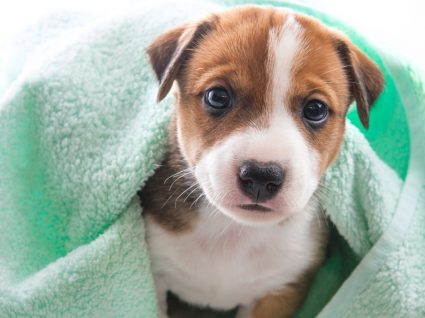 Primeiro banho ao cão: cuidados a ter