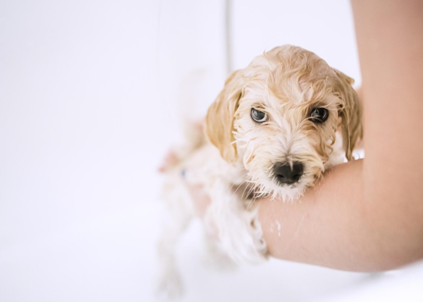 Primeiro banho ao cão: tutora a dar banho na banheira