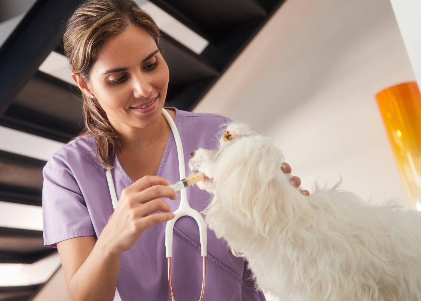Veterinária ao domicílio a dar medicamento a cão