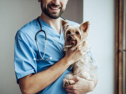 Veterinário ao domicílio para tratar de cão