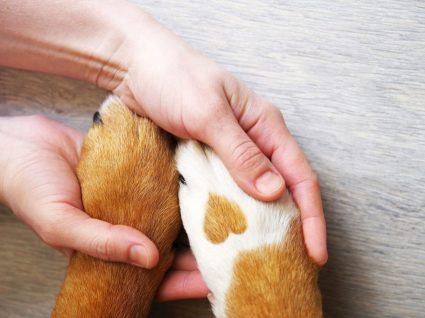Tutora a segurar patinhas de animal doente