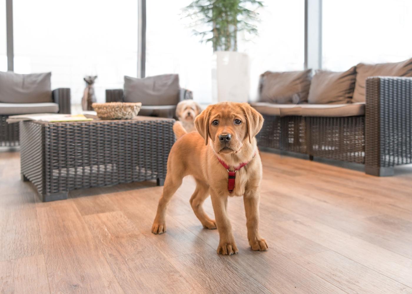 exercícios que pode fazer com o seu cão em casa: corrida de obstáculos