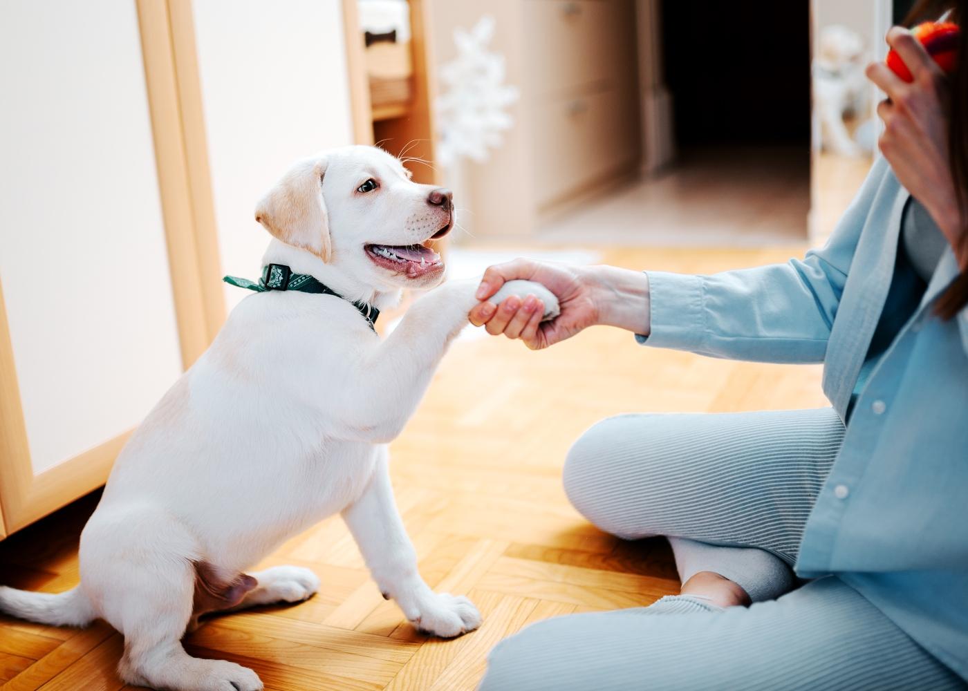 exercícios que pode fazer com o seu cão em casa: ensinar truques
