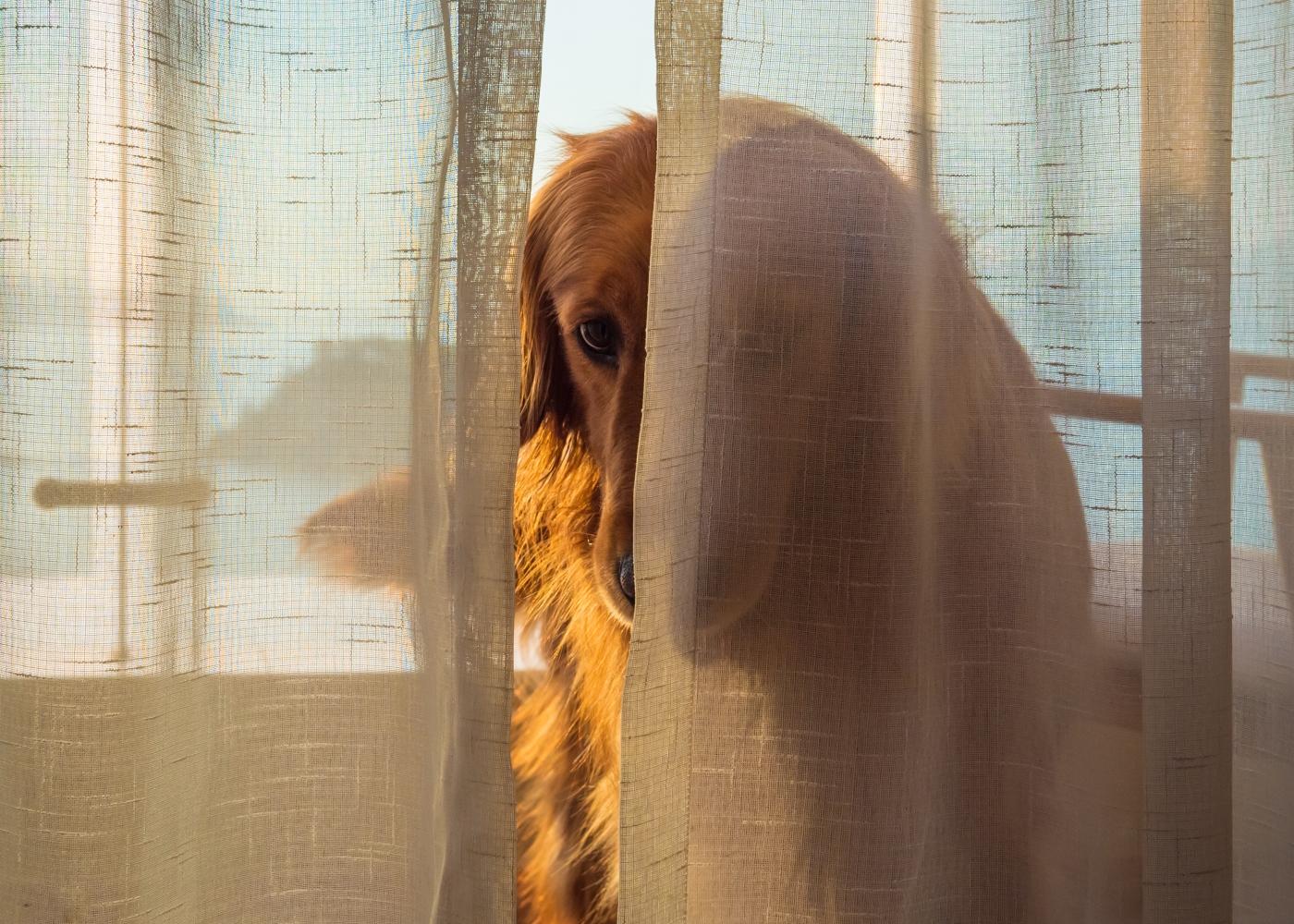 exercícios que pode fazer com o seu cão em casa: brincar às escondidas em casa