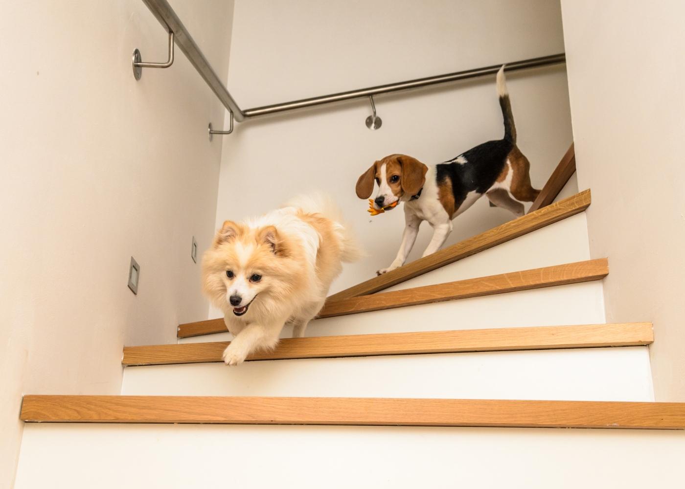 exercícios que pode fazer com o seu cão em casa: subir e descer escadas