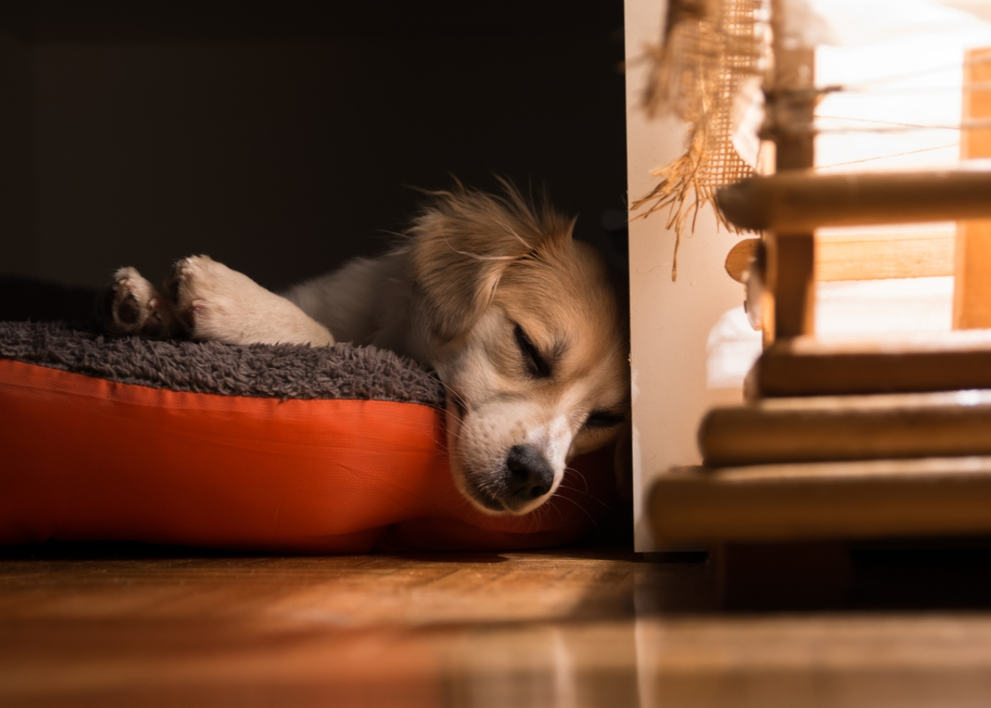 Cão com dificuldade em respirar: causas