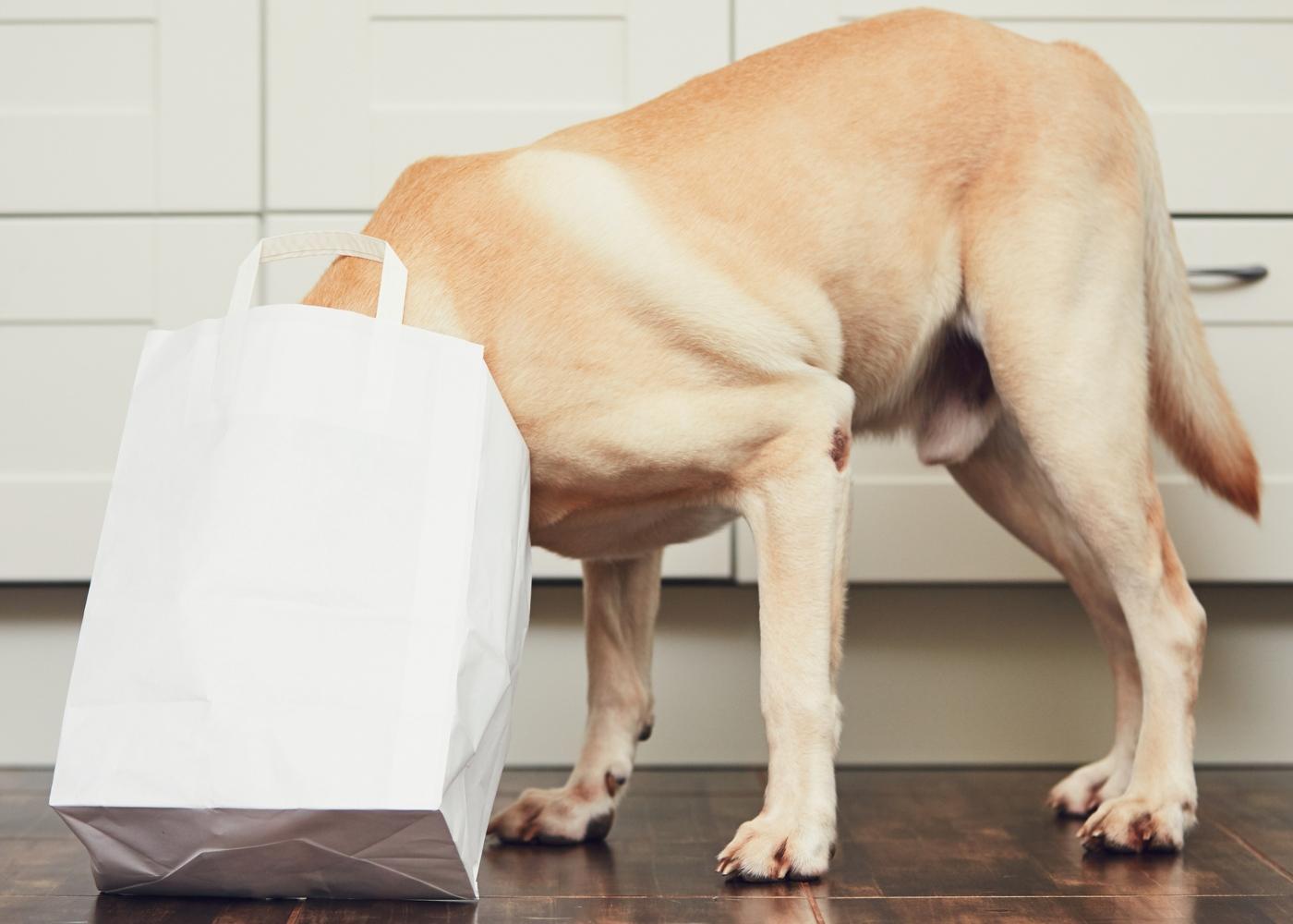 exercícios que pode fazer com o seu cão em casa: quebra-cabeças com comida