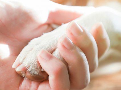 Obrigatoriedade de declarar óbito e desaparecimento de animais de companhia: tutora a segurar pata de cão
