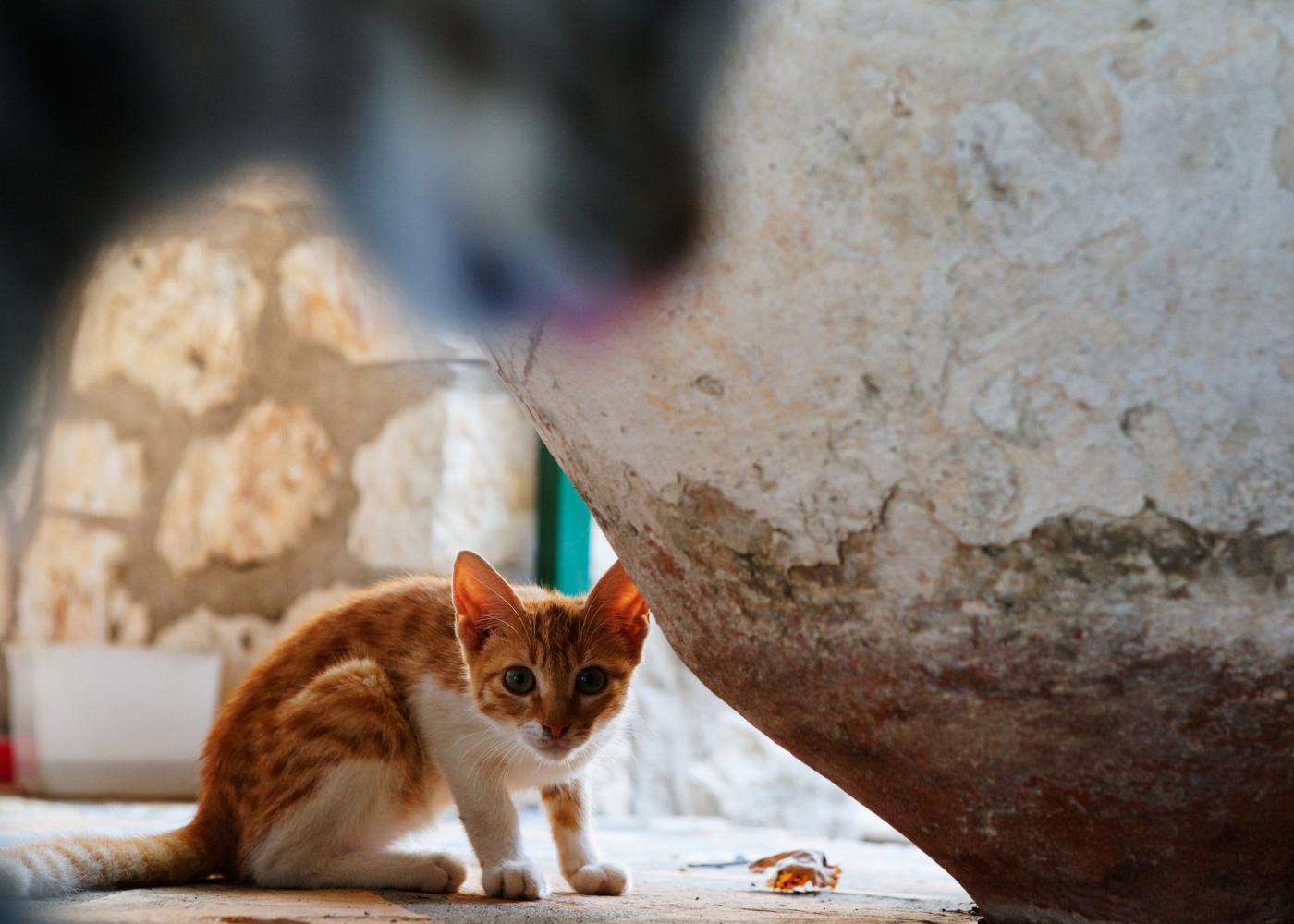Colónias de gatos e projetos CED: gatos de rua