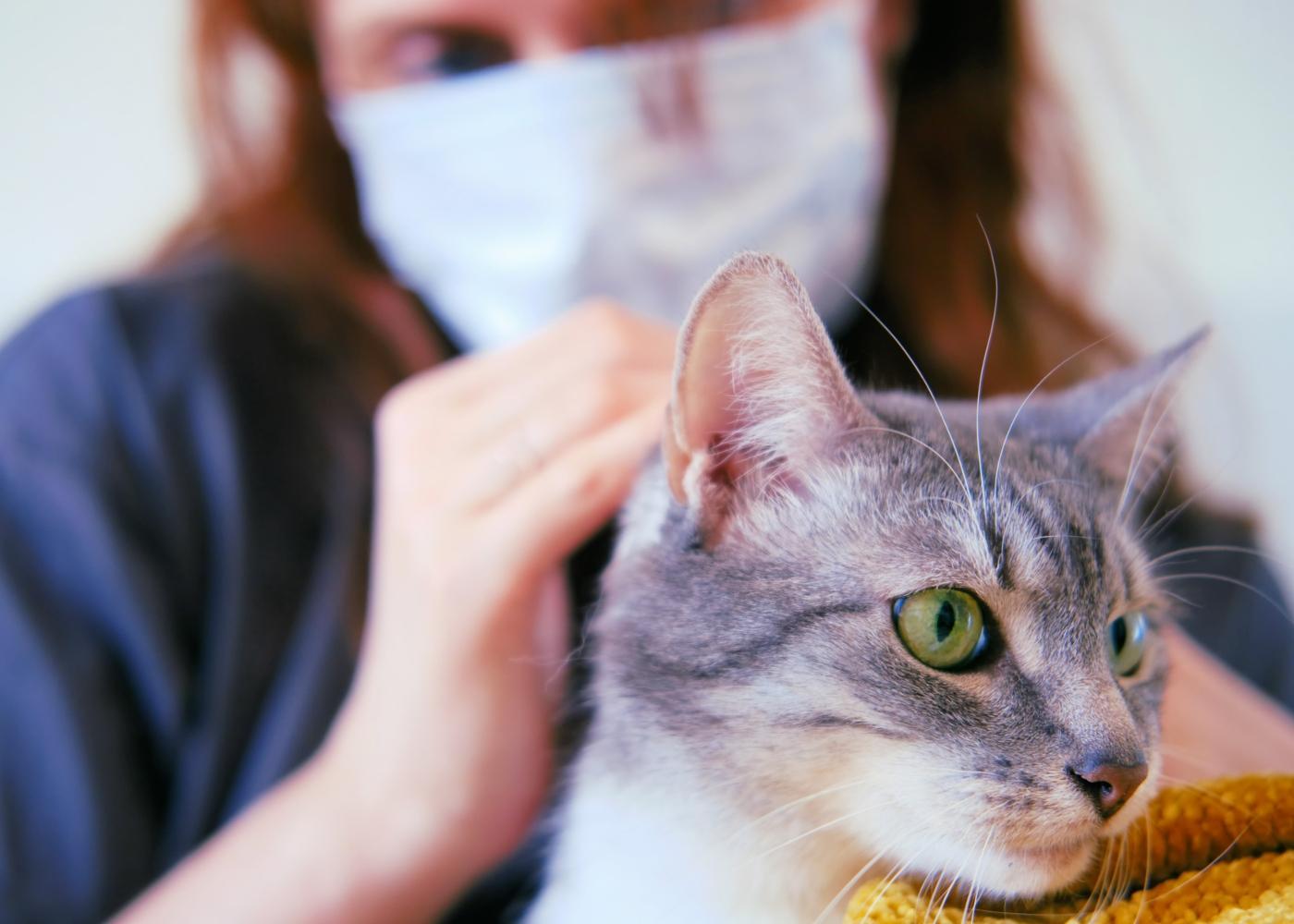 COVID-19 e animais de estimação: mulher com máscara a dar mimos ao gato