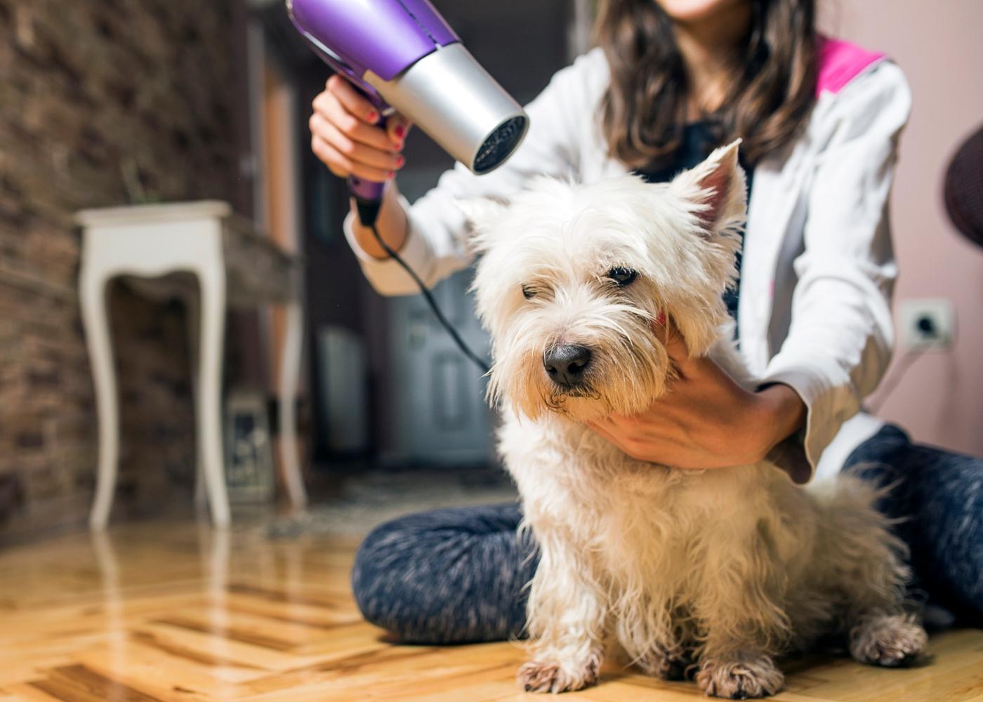 Mulher a secar patudo com secador para evitar o cheiro a cão