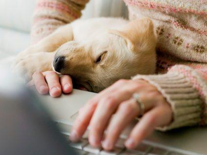 Miosite e poliomiosite em cães: O que são estes problemas
