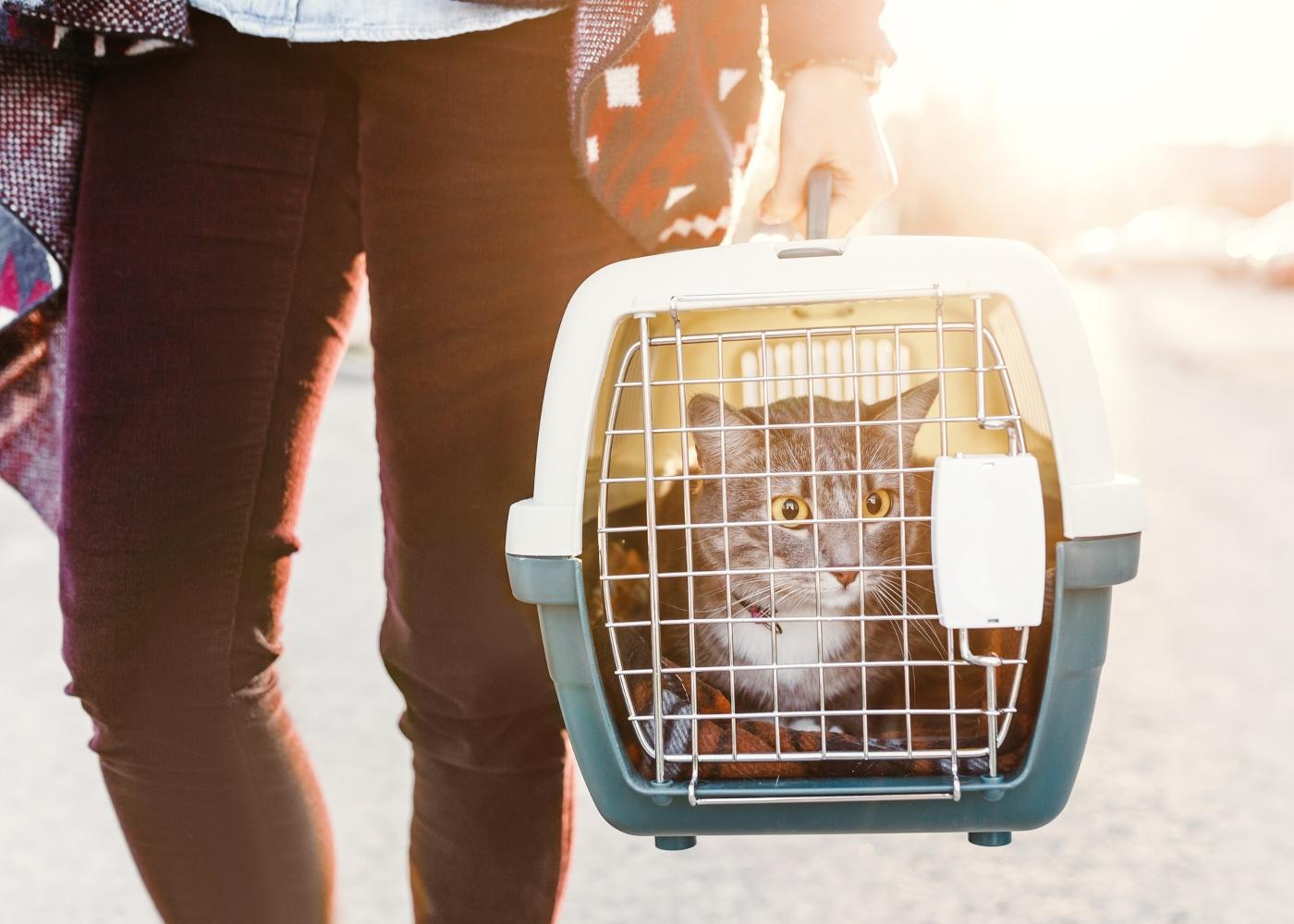 Idas ao veterinário: mulher a levar gato ao veterinário numa situação urgente
