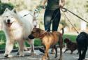 Mulher a tomar conta de animais de estimação de outras pessoas