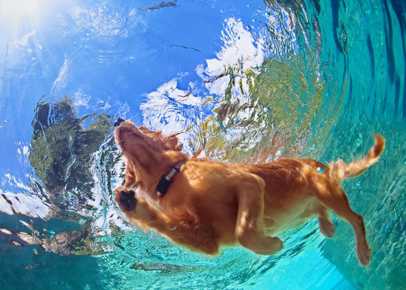 Cão a nadar numa piscina