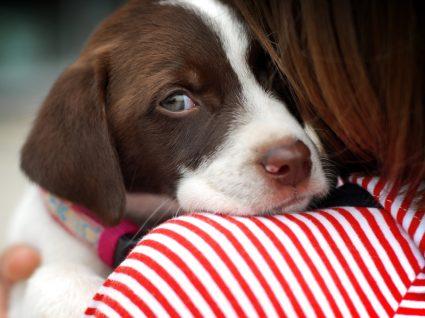 Cinofobia: tutora com o cão no colo